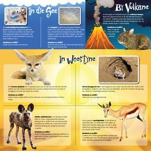 diere borselwurm vulkaan-konyn fennec-jakkals ord kangeroe-rot wildehonde springbokke hoezit infografika