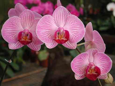 il fiore di base mi ricorda il profumo di fiori forti