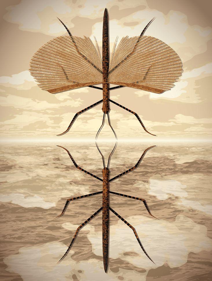 Evolution, You're Drunk: DNA studies topple the ladder of complexity. Illustration by Daniel Hertzberg. #nautilusmag #illustration #biology #evolution
