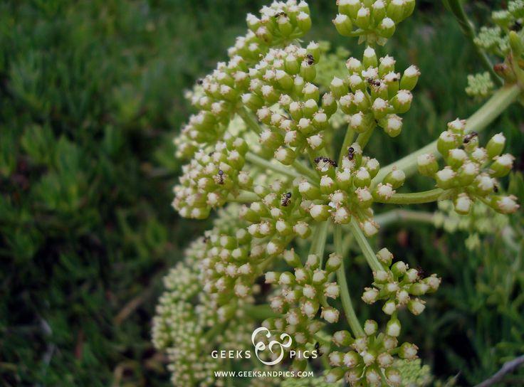 Flower, ants. http://www.geeksandpics.com/