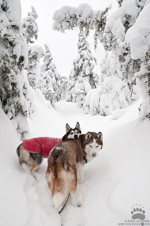 Winter hiking with canine friends