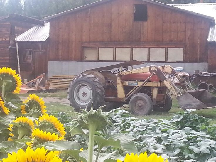 Ford tractor in front of barn at McMillan Farms.