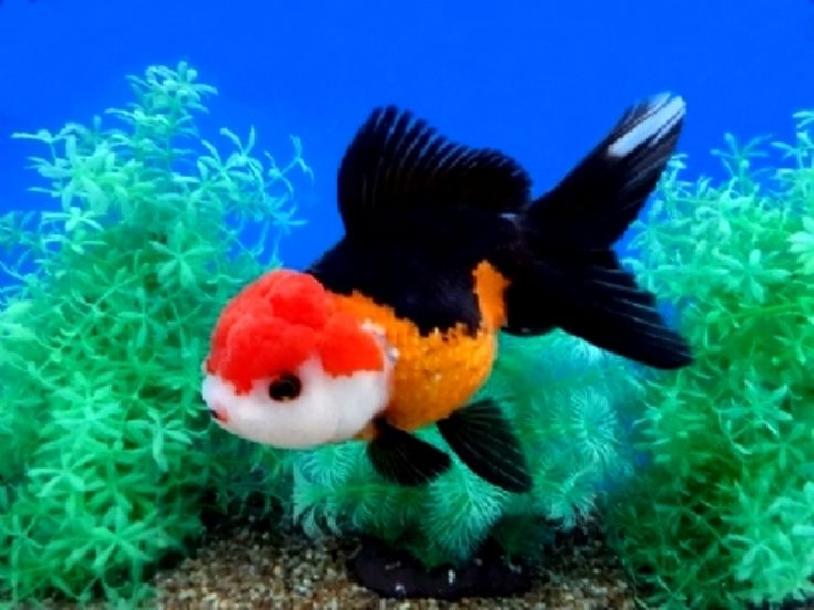 1000 images about goldfish and koi on pinterest for Pond fish diseases
