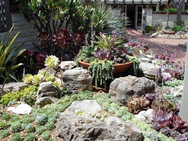 Front Yard Succulent Gardens Archives - Succulent Gardening