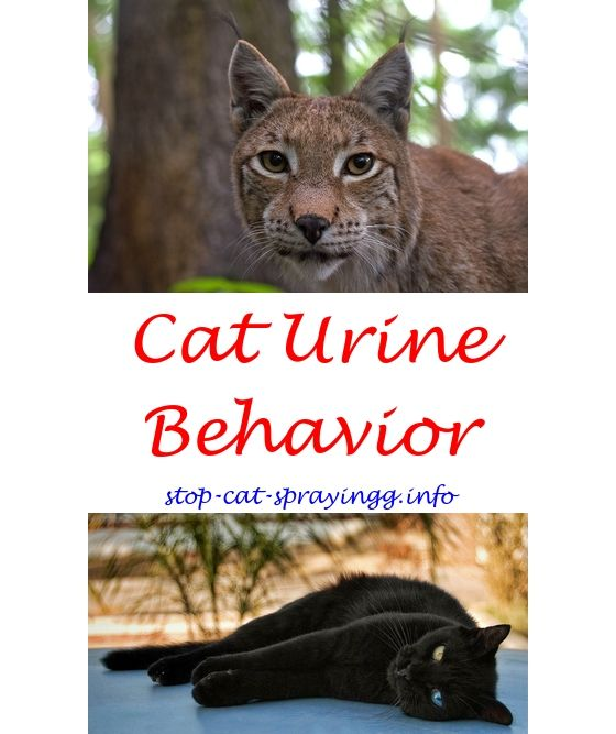 Free Boat Plans Male Cat Spraying Cat Urine Cat Urine