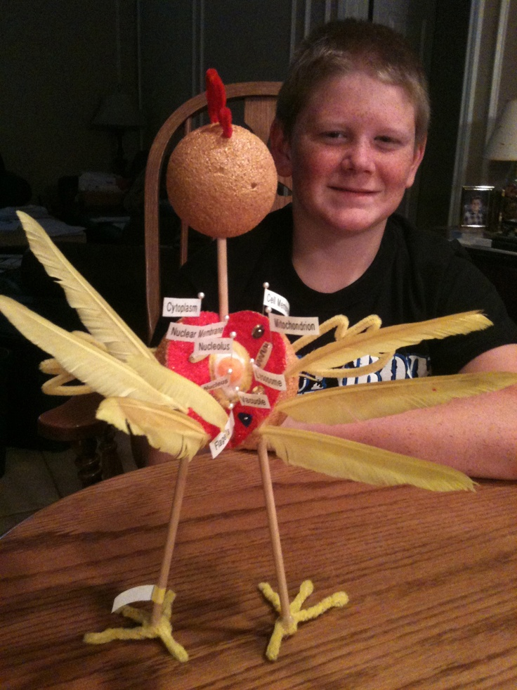 Best 25+ 7th grade science projects ideas on Pinterest ...