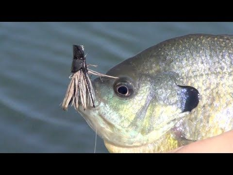 Panfish porn fly fishing for bluegill bream on fly for Fly fishing for bluegill
