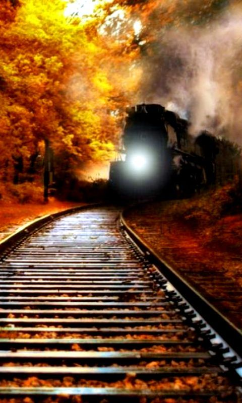 train  fall  leaves  colors
