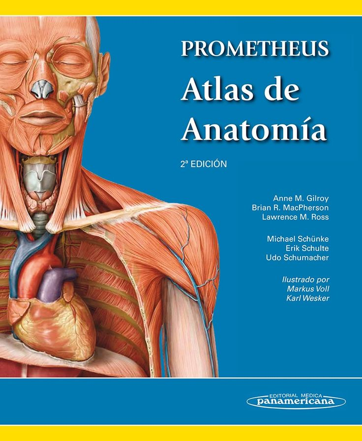32 best Anatomía e histotología, biomecánica images on Pinterest