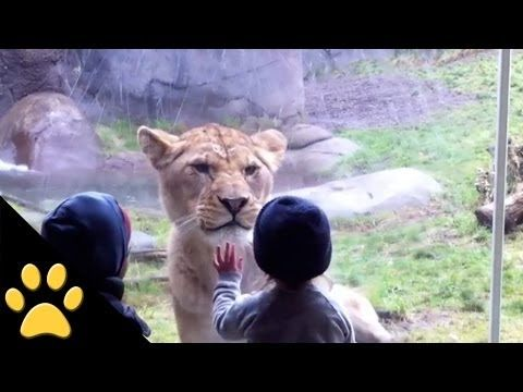 Watch How These Kids And Animals React To Each Other At The Zoo! - Read more: http://gwyl.io/watch-how-these-kids-and-animals-react-to-each-other-at-the-zoo/