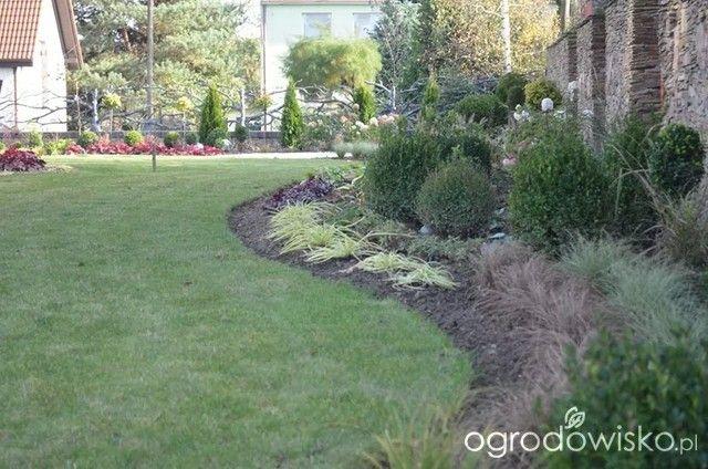 zielono mi...czyli ogrod iwony - strona 5 - Forum ogrodnicze - Ogrodowisko