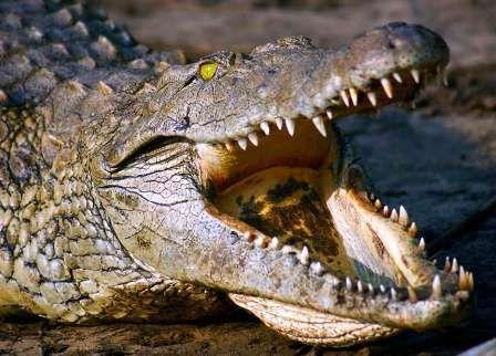 A Pasqua allo zoo di Napoli è festa per i nuovi arrivi: il coccodrillo del Nilo e lippopotamo Natalino