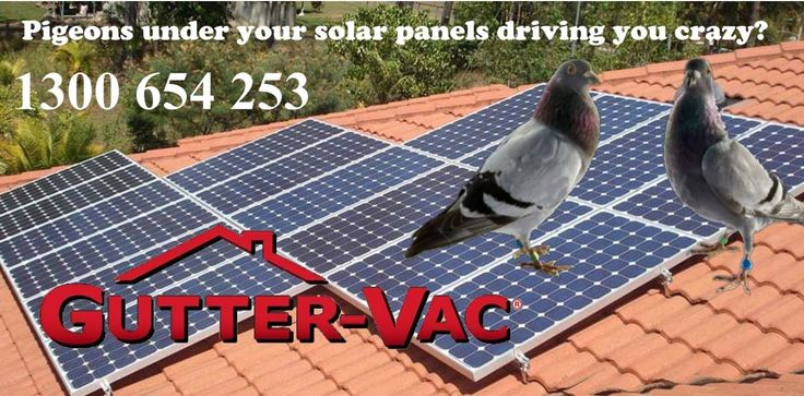 Did you know that Gutter-Vac also cleans solar panels?   Cleaning your solar panels can increase their efficiency. Solar panels over time will build up a film like layer of dust and dirt that reduces how effective your solar panels are.    As we are fully safety trained and insured, we can not only be on your roof working safely, we also have specialised methods of cleaning your solar panels – without damaging them.  Get a free quote by calling 1300 654 253.