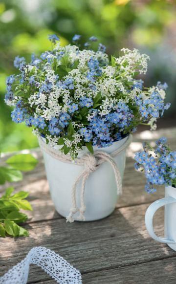 Von April bis Juni blüht Waldmeister – dann, wenn auch Vergissmeinnicht den Garten mit himmelblauen Blütenwolken schmücken. Gemeinsam in die Vase gestellt, bilden sie ein romantisches Duo