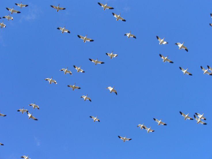 overhead - hard to capture