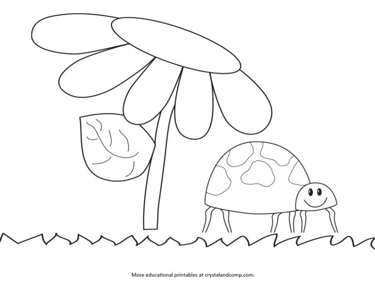 Kid Color Pages Ladybug Life Cycle KBN Activities for