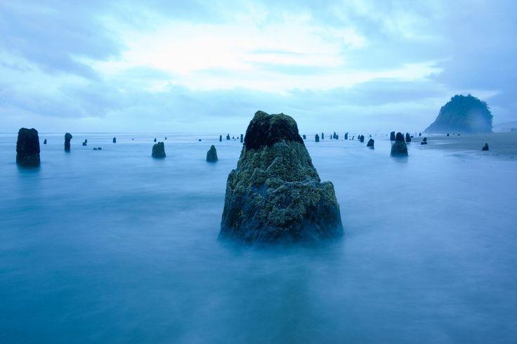 Spookbos in zee – Foto van de dag
