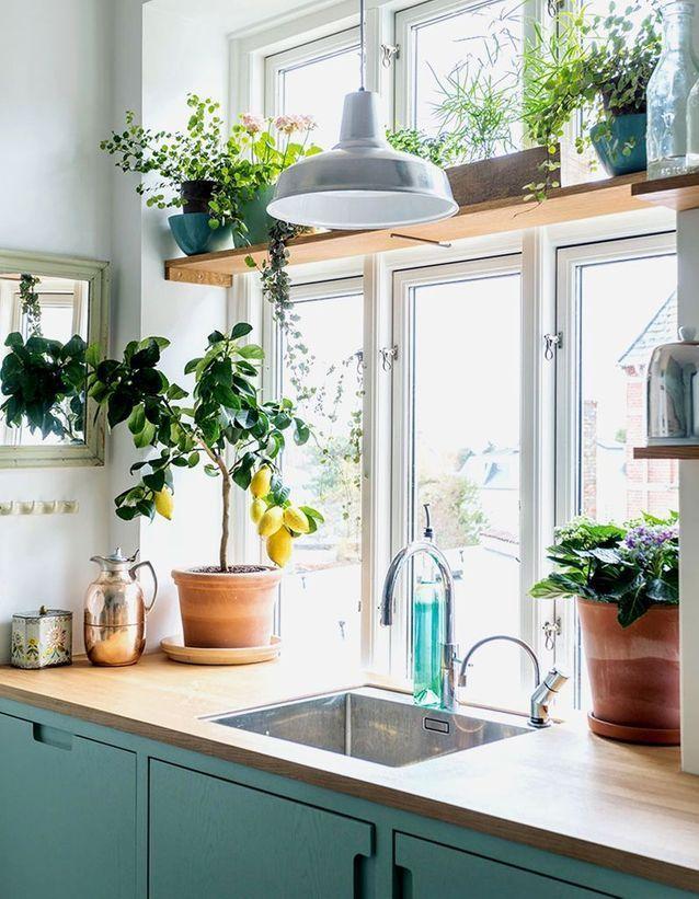 Végétaliser son intérieur sans perdre de place en fixant une étagère ou en …