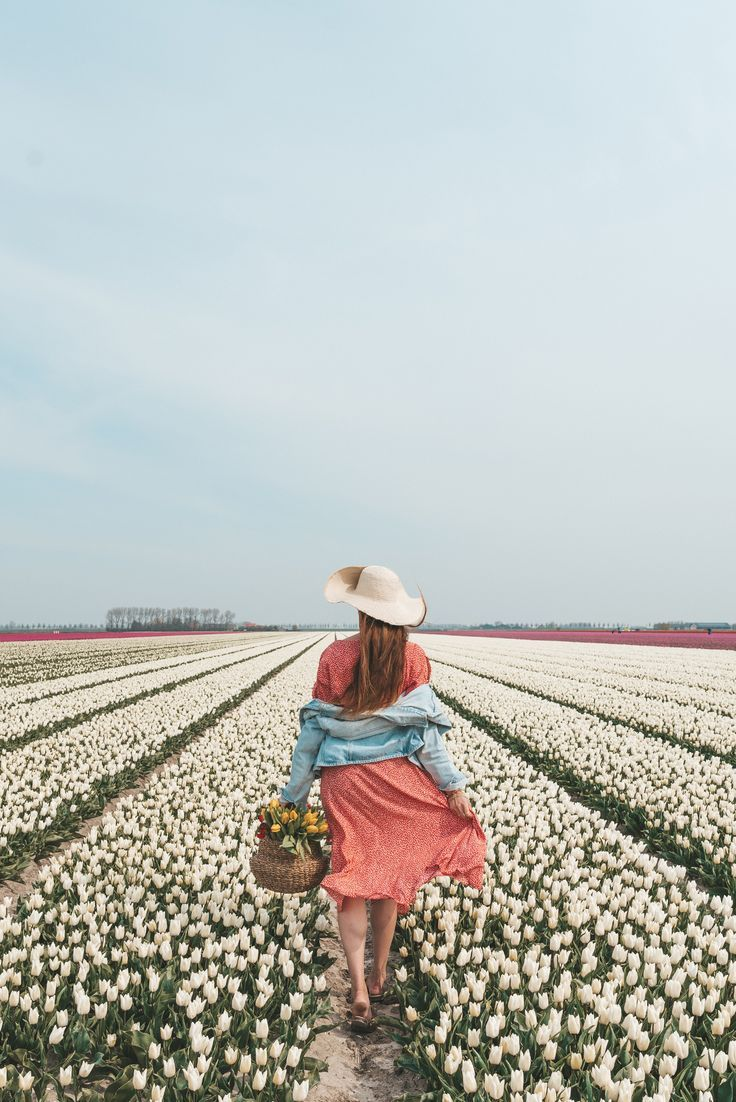 Fantastic Totally Free Tulip Fields Thoughts In 2020 Tulip