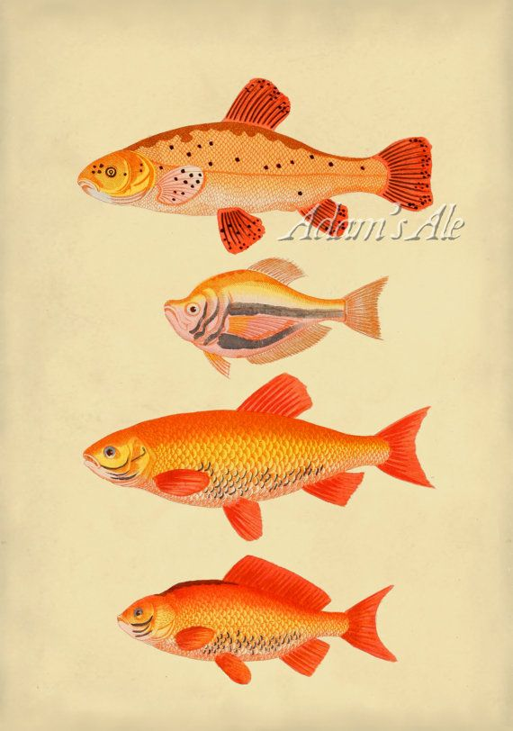Vintage scientific illustration art print by for Big fish printing