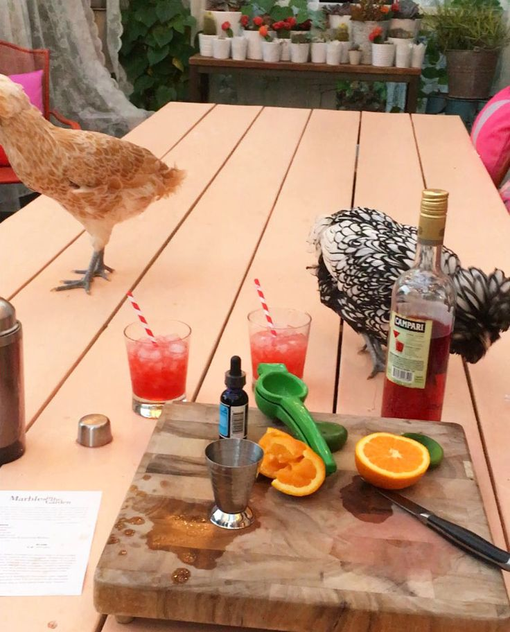 Mixing up the Marbles in the Garden—with chickens!