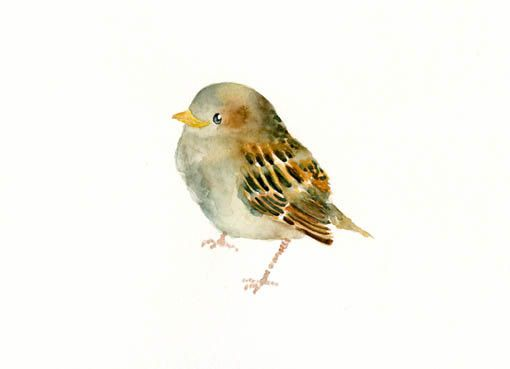 BABY SPARROW by DIMDImini ACEO print by dimdimini on Etsy, $5.00