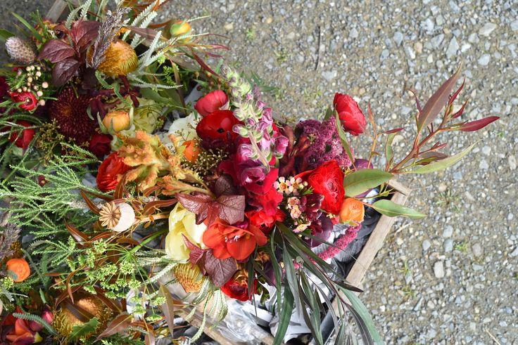 September Wedding, spring flowers, bouquet, double tulip, ranunculus, pepper tree, snapdragon, deep reds, burgundy, cream