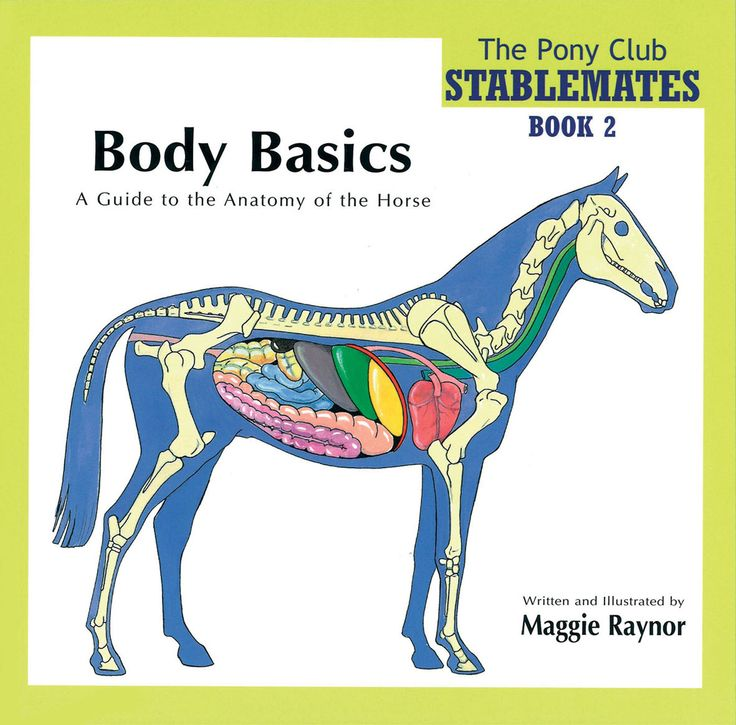 Stablemates Book 2 Body Basics By Maggie Raynor