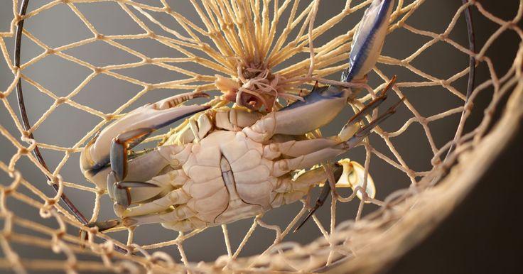 Cómo matar a un cangrejo. Por compasión, un cangrejo debe matarse antes de ser cocinado. Soltar un cangrejo vivo en el agua hervida causa que el animal sufra y que su cuerpo se deshaga. Además del sufrimiento, esto hará que la carne del cangrejo quede dura y acuosa. Si se mata y luego se cocina, el cangrejo constituirá una suculenta comida para servir a tus familiares o ...