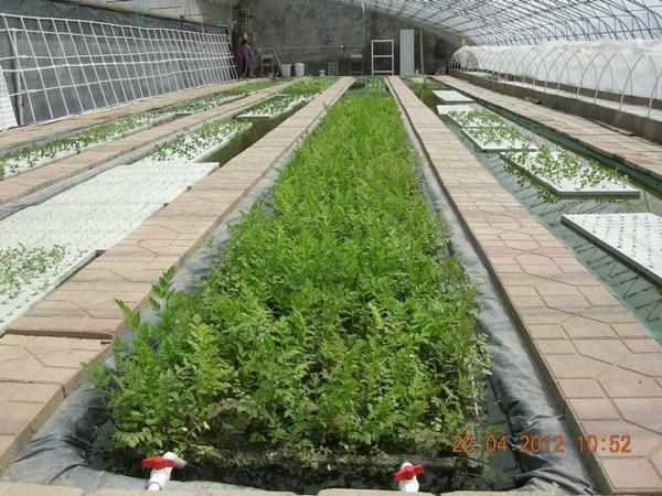 China Agrotime Greenhouse Hydroponic Systems Aquaponic $ Www