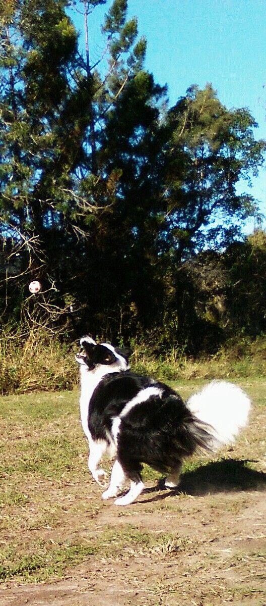 "PADDY........""THERE'S THAT GODDAMN BALL AGAIN!"" dogsbigdayout.com.au"