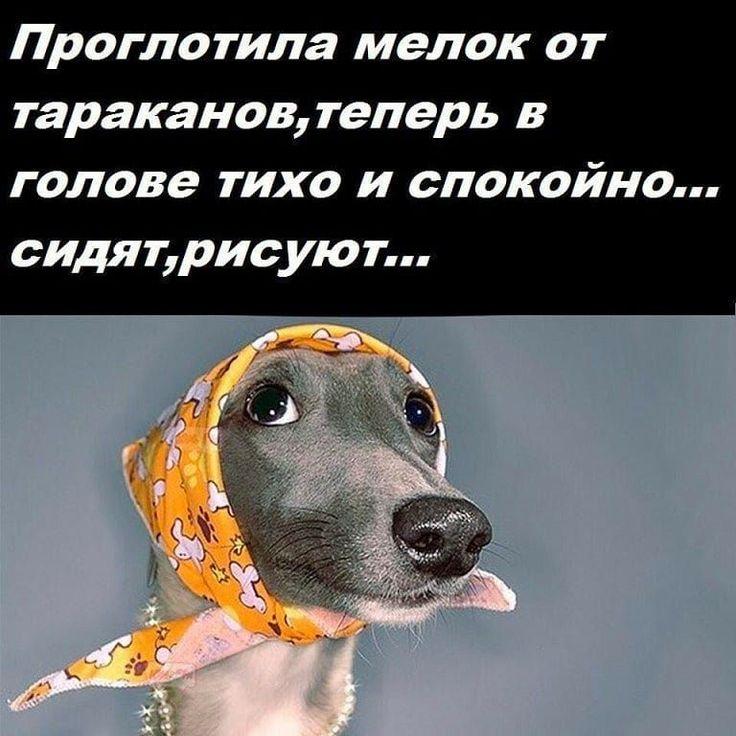"""В автобусе пьяный кавказец наваливается всем телом на женщину... Поговорки, афоризмы и шутки - змечайте, как благтворно влияет на психику время, проведенное за чтением этих постов <a href=""""https://www.natr-nn.ru/blog/category/entertainment"""">Еще больше постеров</a>"""