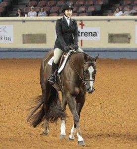 18 best practice (english riding) images on Pinterest ...