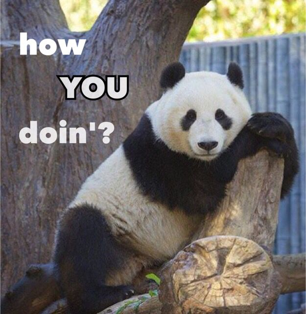 Just look at that pose ^_^ || Such a flirt || Cute funny panda meme || Timeless line || How YOU doin'?