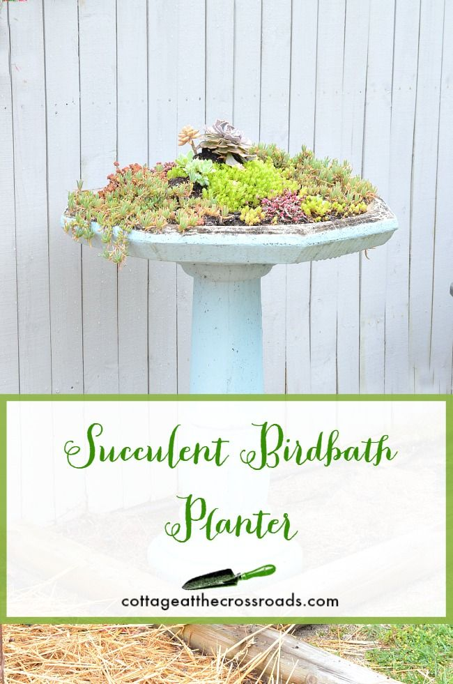 Succulent Birdbath Planter - Cottage at the Crossroads