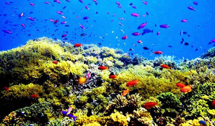 All Indonesia Destination: Breathtaking Underwater Life In Bunaken