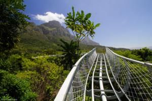 Belmond Mount Nelson Hotel recommend the Kirstenbosch Centenary Tree Canopy Walkway in Cape Town. Just opened, this 130m long path weaves through and over the treetops of the Botanical Gardens, revealing a unique ecology.