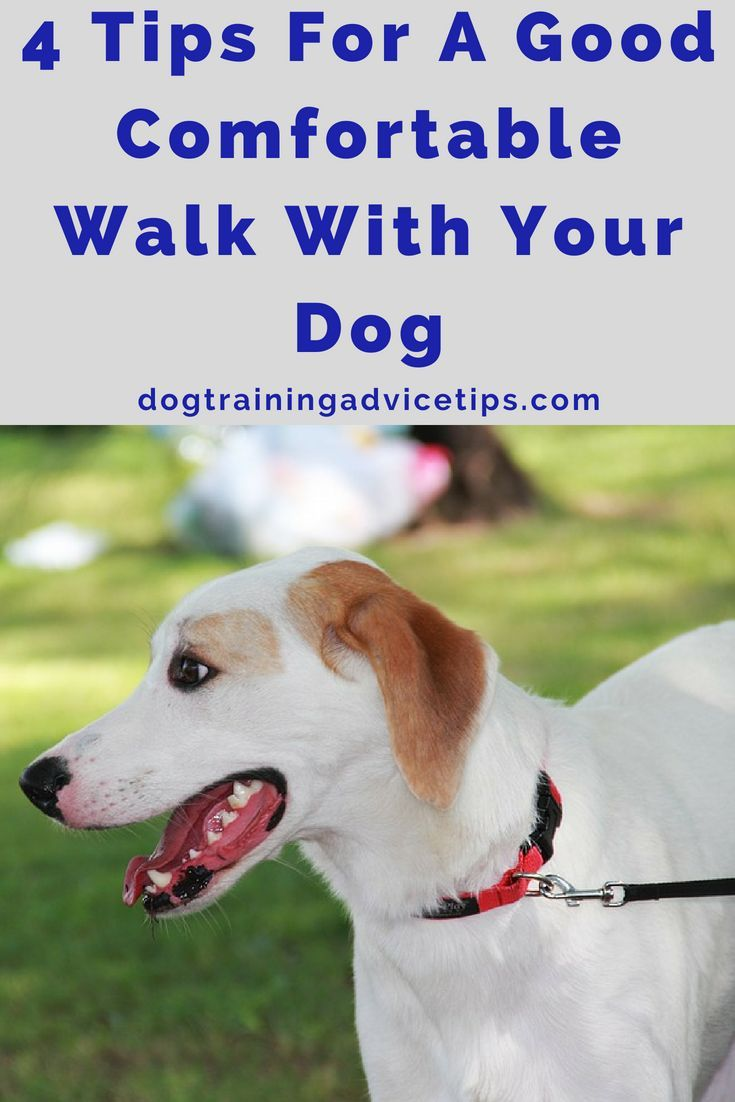 4 Tips For A Good Comfortable Walk With Your Dog Dog Training