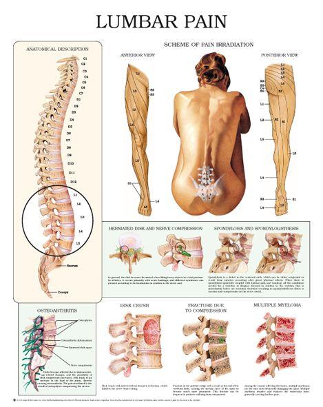7 besten Body anatomy Bilder auf Pinterest | Anatomie, Ergotherapie ...