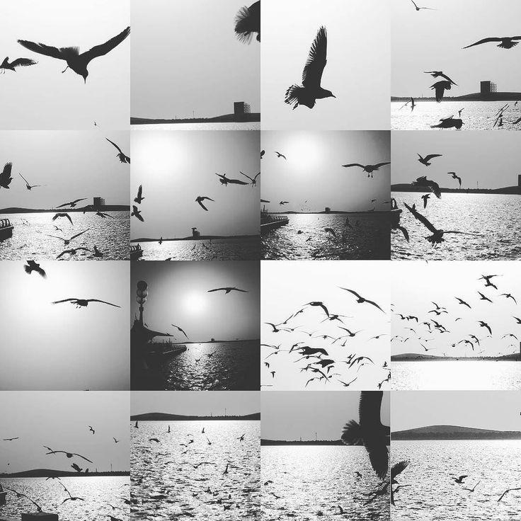 #birds #abudabi #emirates #soulful_bnw  #edits_bnw #bnw_lombardia #bnw_planet_2017 #bw_perfect #bnw_rose #bw_divine #top_bnw_photo #passion_for_bnw #capturabnw #bestphotogram_bnw #pocket_bnw #top_bnw #masters_in_bnw #bnw_madrid #amateurs_bnw #world_bnw