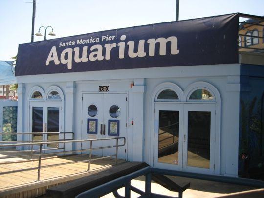 Santa Monica Pier Aquarium - Santa Monica, CA - Kid friendly activi... - Trekaroo  #FamilyTravel