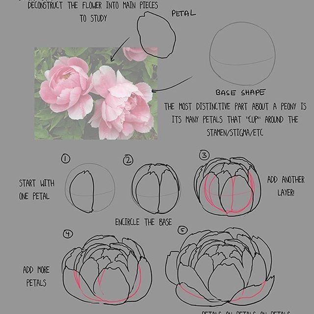 How To Draw Paint A Peony Peony Art Peony Painting Peony Drawing