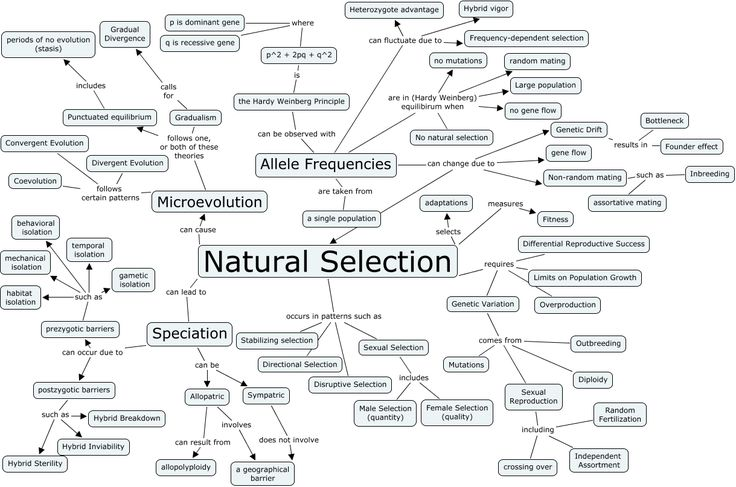Evolution Evolution Concept Map