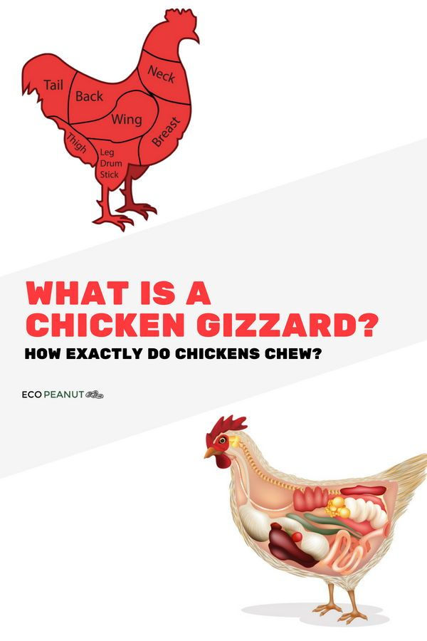 How Do Chickens Eat With Their Gizzards Of Course But What Exactly