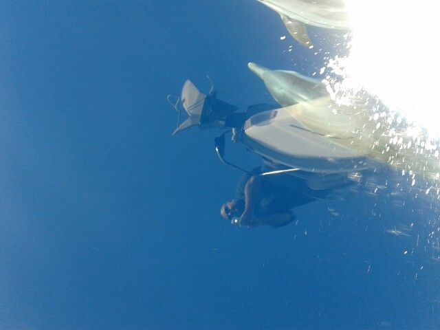 Day sailing Halkidiki with the dolphins