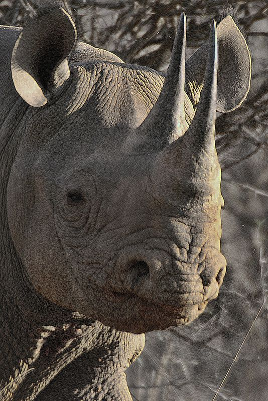 Black Rhino PICT8759