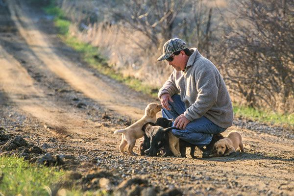 Getting a new gun dog off to a good start is critical to future hunting success. Find out how to maximize your early training for best results at Gun Dog.
