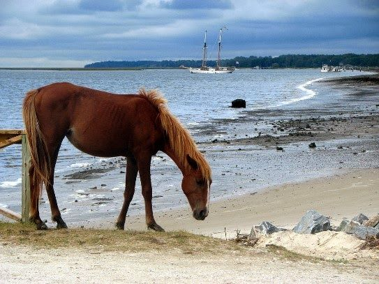 Cumberland Island.