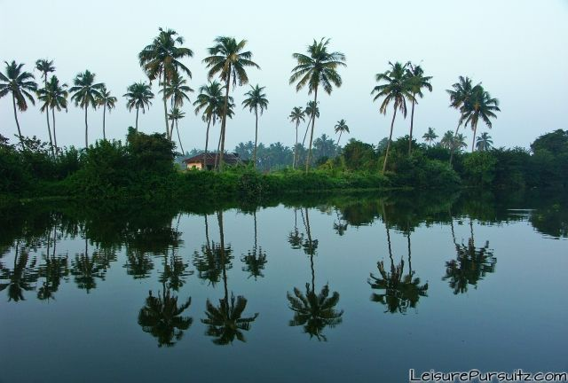 Coconut trees lined along Lake Vembanad @Kumarakom, Kerala