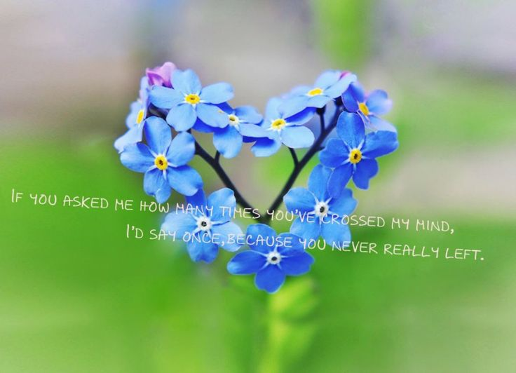 Quotes About Loving Husband And Kids: Picture Of Little Blue Flowers With Quote About Loving Husband ~ Mactoons Family Inspiration